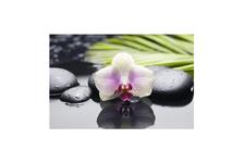 Панно 2 Belani Азалия Орхидея 250 х 350 мм, фисташковый