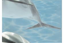Панно Березакерамика Лазурь Дельфины 5, 250х350 мм