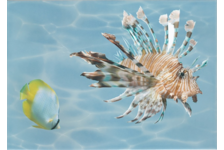 Панно Березакерамика Лазурь Морской мир 2, 250х350 мм