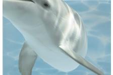 Панно Березакерамика Лазурь Дельфины 8, 250х350 мм