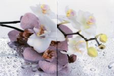 Пано Terracotta.Pro Alba Orchid 600х400  мм