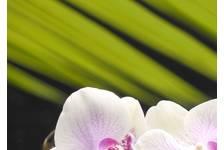 Панно 1 Belani Азалия Орхидея 250 х 350 мм, фисташковый